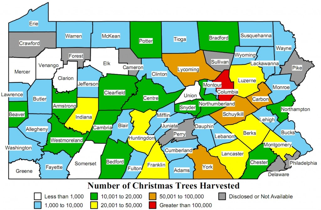 1.2 Million PA Trees Lopped Down for Christmas | Lancaster PA Blog
